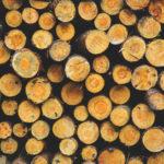 Продукция из древесины: свойства и применение